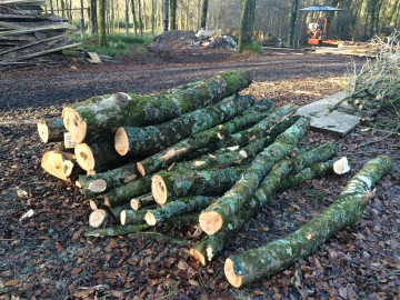 Felled timber logs at Hooke Park